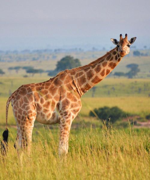 3 Day Safari to Queen Elizabeth