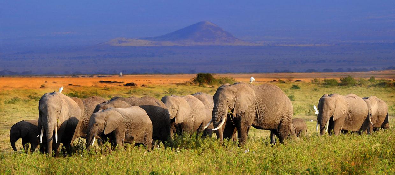 Bigtime-Safaris-Amboseli-National-Park-Elephants-Mount-Kilimanjaro