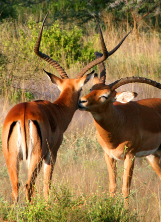 Mt Kenya National Park