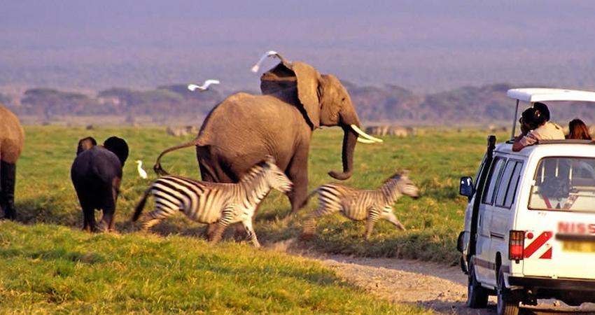 3 Days Kenya Lodge Safari Amboseli   Big Time Safaris